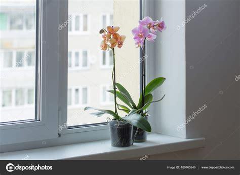 Window Ciel by 窓辺に美しい蘭の花 ストック写真 169 Kruchenkova 180765946