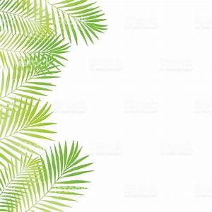 Summer Tropical Palm Tree Leaves Border Frame Background ...