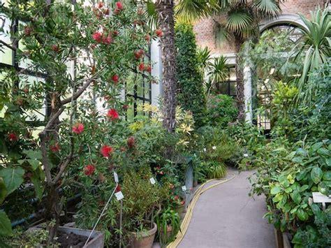 Extrem Winterharte Kübelpflanzen by Pflanzen Archive Mein Mediterraner Garten