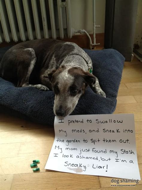 dog shaming  shameful     doggie misdeeds thedailytopcom