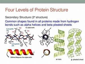 Proteins Slides