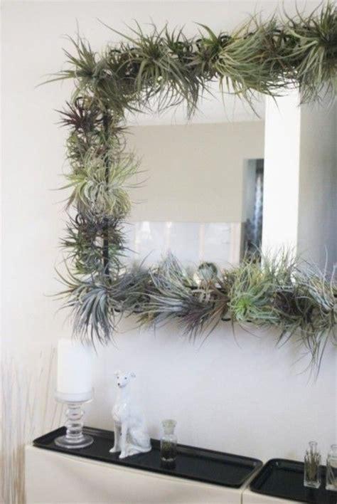 air plant frame fun idea     mirror air
