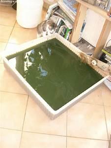 Piscine Plastique Dur : petite piscine en plastique dur ~ Preciouscoupons.com Idées de Décoration