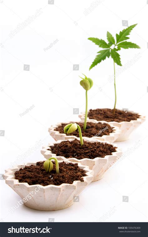 Plant Growthstages Plant Development Against White Stock Photo 105476309 Shutterstock