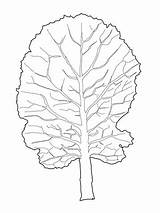 Greens Coloring Leaf Collard Mustard Pages Colouring Printable Picolour Supercoloring Categories sketch template