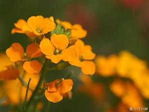 Pictures Of Orange Flowers - Beautiful Flowers