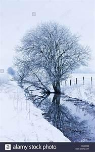Baum Am Wasser : baum am bach im winter stockfoto bild 47262888 alamy ~ A.2002-acura-tl-radio.info Haus und Dekorationen
