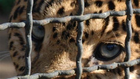 Animali In Gabbia - petizione 183 no allo zoo 183 change org