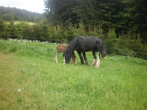 kraeuter allergien beim pferd natuerlich pferds webseite