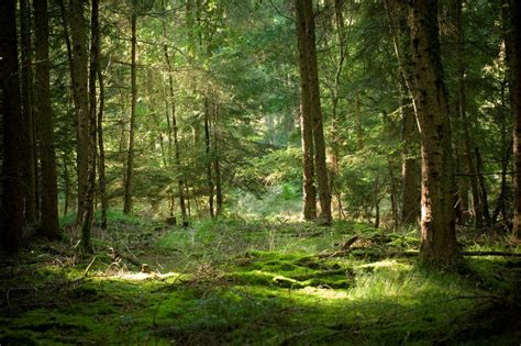 Forest Of Dean Night Walk Outdoorlads