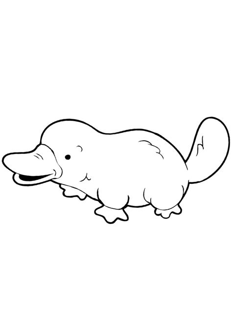 platypus coloring pages    print