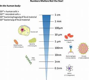Relative Sizes Of Major Host Cells And Their Components