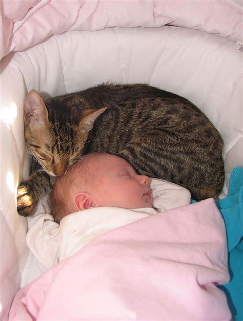Preparing Your Cat For A New Baby (via Aspcacom) Check