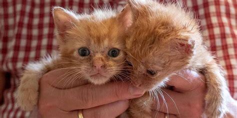 katzen transportbox für 2 katzen katzen babys auf dem land in brandenburg werden oft noch