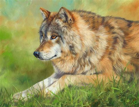 Grey Wolf Painting By David Stribbling