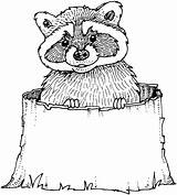 Raccoon Coloring Racoon Printable Wildlife Taco Template Drawing Poker Tree Stump Chip North Sheet Tacos Dragons Clipart Animals Getdrawings Raccoons sketch template