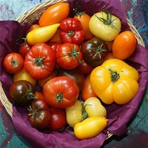 Comment Tuteurer Les Tomates : 15 points essentiels pour viter le mildiou des tomates ~ Melissatoandfro.com Idées de Décoration