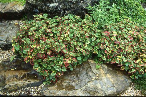 erosion plants plants prevent erosion
