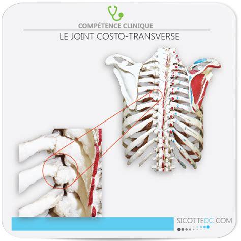 douleur dos cancer les douleurs entre les omoplates origine et explication cause hernie discale cerivcale