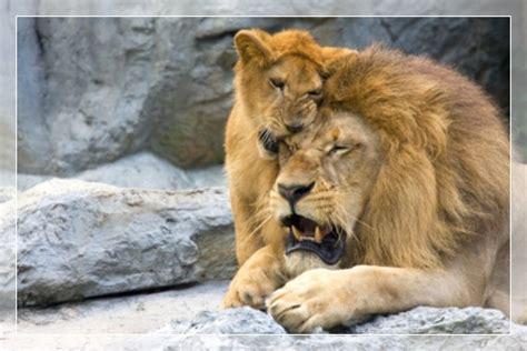 top  dads   animal kingdom