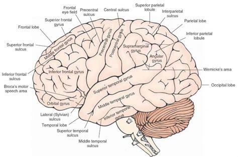 Label Brain Diagram by Brain Diagram Labeled