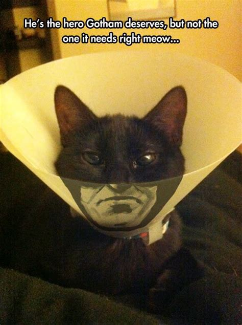 Batman Cat Cone