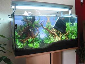 Co2 Rechner Aquarium : 60l flowgrow aquascape aquarium database ~ Orissabook.com Haus und Dekorationen