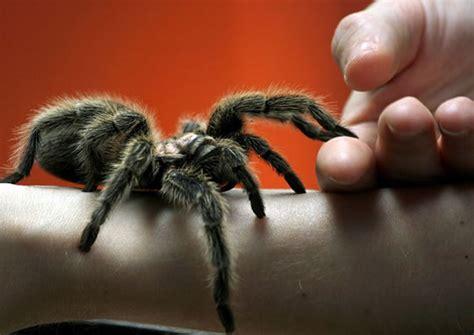 phobias   beaten national council  hypnotherapy