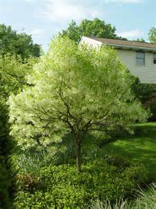 small trees for backyard landscaping eanavevai home interior design