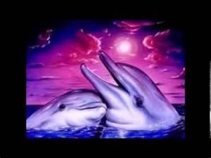 Schöne Delfin Bilder : delfine wundersch ne bilder youtube ~ Frokenaadalensverden.com Haus und Dekorationen