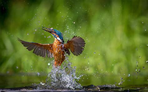 Animals Birds Wallpaper - animals birds water wallpapers hd desktop and mobile