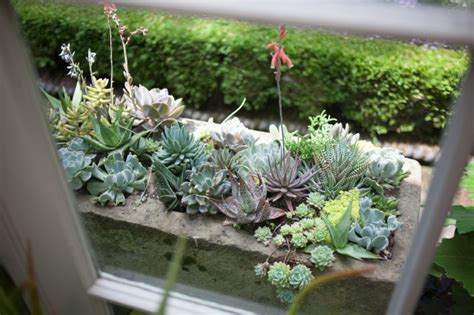 Easy Succulent Container Garden  Fresh American Style