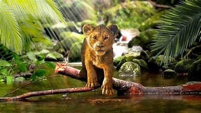 Lion Simba King 4k Wallpapers Disney Background