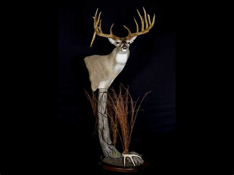 1000+ Images About Deer Taxidermy Ideas On Pinterest