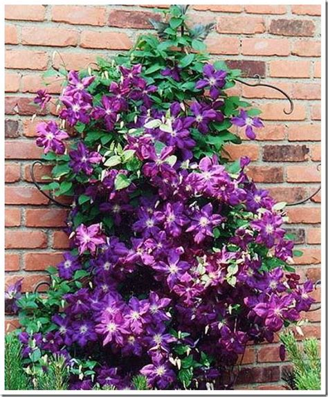 5 Easy Effortless Vines  Clematis Varieties, Mailbox Post