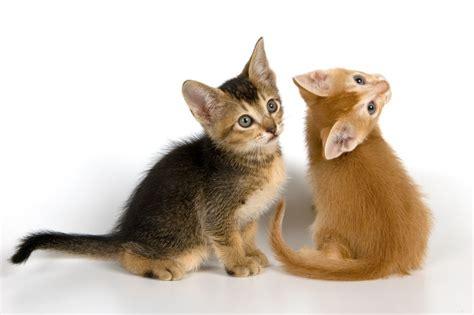 imagenes de dulces gatitos