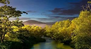 Wallpaper, Sunlight, Trees, Landscape, Forest, Sunset
