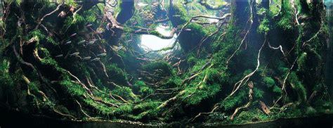 award winning aquascapes aquarien gestalten wie urwaldlagunen dravens tales from