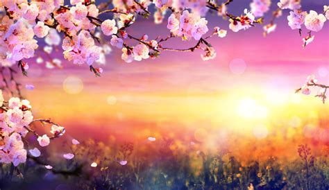 Interesting and Fun Facts About Spring - MyStart