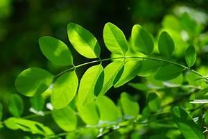 Free Images : grass, branch, flower, botany, chlorophyll ...