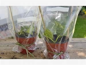 Hortensien Vermehren Durch Stecklinge : hortensien durch stecklinge vermehren stecklinge ~ Lizthompson.info Haus und Dekorationen
