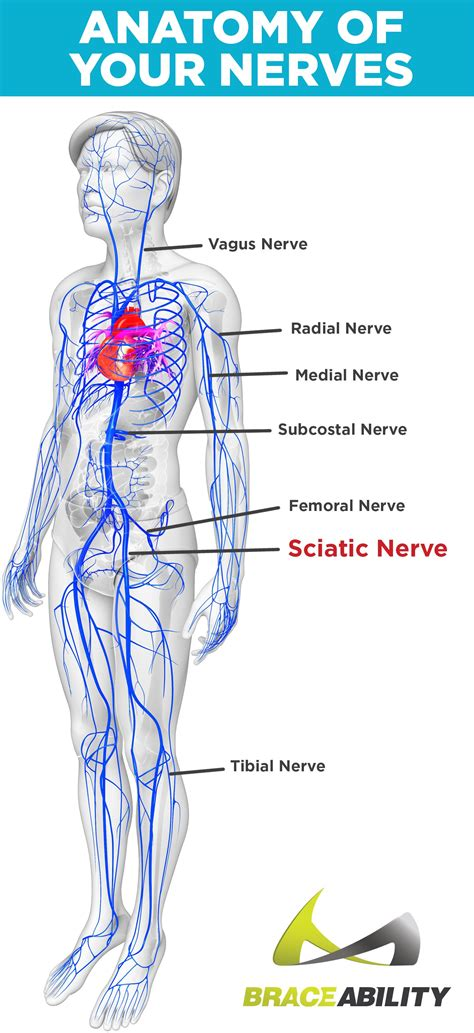 Pain that starts posterior under the scapula and wraps around the right side of the body below the lower ribs? Sciatica & Pinched Nerve Pain: Symptoms, Causes & Lower Back Treatment