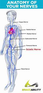 Sciatica  U0026 Pinched Nerve Pain  Symptoms  Causes  U0026 Lower