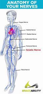 Sciatica  U0026 Pinched Nerve Pain  Symptoms  Causes  U0026 Lower Back Treatment