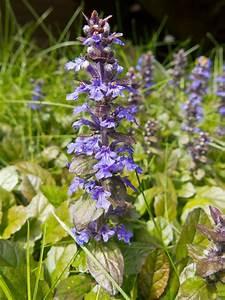purple flowers taking lawn flowers forums