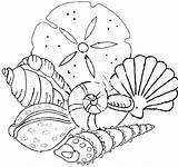 Shells Beach Coloring Pages Sea Seashell Seashells Pattern sketch template