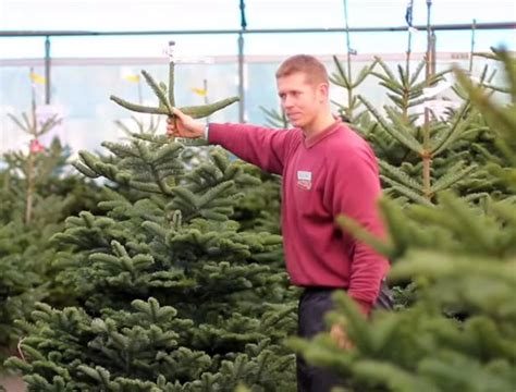 christmas 2016 where to buy your real christmas tree in