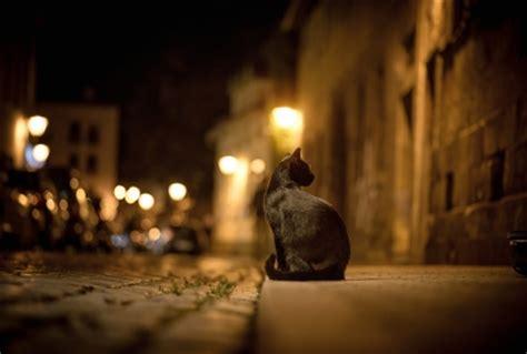 黒猫と街の壁紙  壁紙キングダム Pc・デスクトップ版