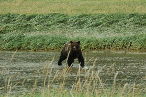 animals klondike gold rush national historical park