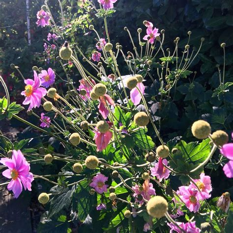 Garten Pflanzen September by September Sonnen Sonntagsfr 252 Hst 252 Ck Im Garten Living Ruhr